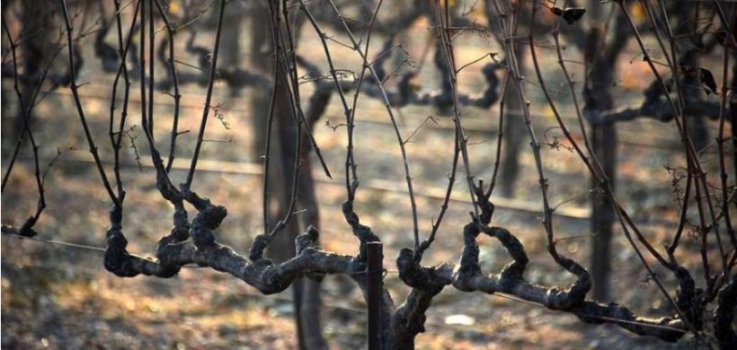 California en crisis ¿chance para el vino de Mendoza?
