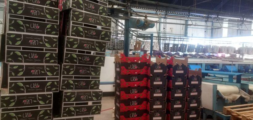 Empresa del Valle de Uco embarcó su primera carga de manzanas a Europa