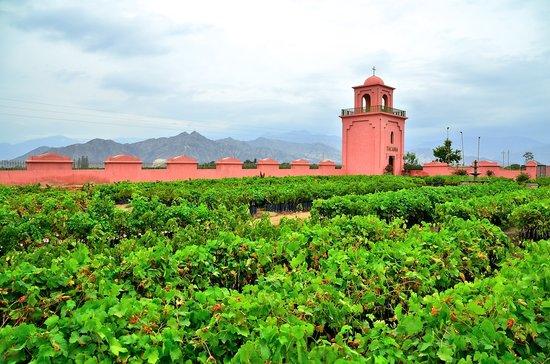 Mendoza busca vender conocimientos a Perú para acompañar la reconversión de viñedos de Ica